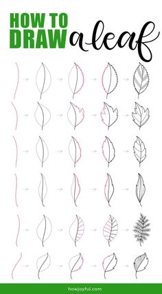Learn how to draw a leaf step by step in this tutorial where we will go from super simple and easy, to drawing specific leaves and coloring them. #drawingleaf #drawingleafs #doodleleaf #doodleleaves #leafdrawing #leavesdrawing #bujoleaf #bulletjournaldoodle #doodle