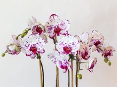The Orchid Nook - beautiful flowers arrangements for every occasion