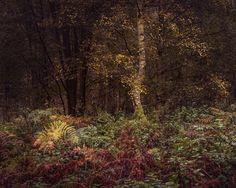 Thetford Forest - Suffolk, England