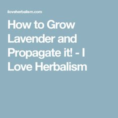 How to Grow Lavender and Propagate it! - I Love Herbalism