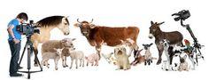 """Kumpulan """"Farm Animal"""" Dalam Bahasa Inggris Beserta Arti - http://www.sekolahbahasainggris.com/kumpulan-farm-animal-dalam-bahasa-inggris-beserta-arti/"""
