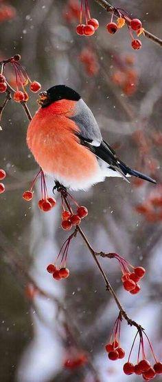 New Animal Photography Wildlife Friends 63 Ideas Cute Birds, Pretty Birds, Beautiful Birds, Animals Beautiful, Exotic Birds, Colorful Birds, Exotic Pets, Bird Pictures, Nature Animals