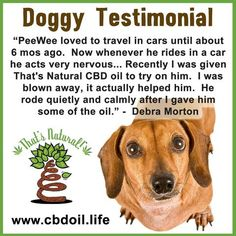 That's Natural CBD Oil for #anxiety in our furry friends!  Animals also have an Endocannabinoid System and may benefit from the non-psychotropic cannabinoid CBD (Cannabidiol).  See more and testimonials at www.cbdoil.life and @cbdhempoil  #dogs #dogslife