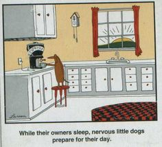 While their owners sleep, nervous little dogs prepare for their day with a cup of coffee. A Gary Larson Dachshund Cartoon Thank you Sharon thank you for the far side I really needed it Dachshund Funny, Dachshund Love, Funny Dogs, Funny Animals, Gary Larson Cartoons, Far Side Cartoons, Far Side Comics, Dog Cartoons, Funniest Cartoons