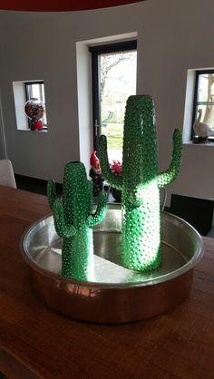 Serax cactus.