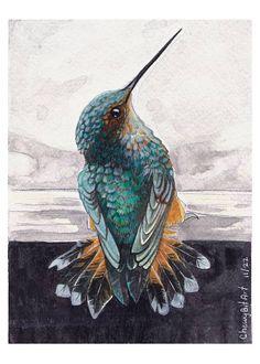 Hummingbird Pictures, Hummingbird Art, Bird Artwork, Feather Painting, Watercolor Bird, Watercolor Techniques, Wildlife Art, Pencil Art, Bird Feathers