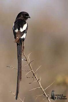 south african bird kingdom -