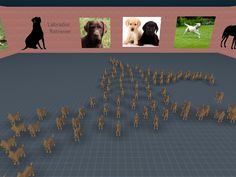 There is currently no exhibition about your favorite dog breeds in town? Create one yourself.