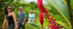 See the Exotic Wonders of Costa Rica with REI.  Going back would be AMAZING!!!