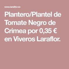 Plantero/Plantel de Tomate Negro de Crimea por 0,35 € en Viveros Laraflor.
