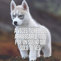 - Learn how I made it to in one months with e-commerce! Me Quotes, Qoutes, Spanish Quotes, Positive Quotes, Inspirational Quotes, Motivational Quotes, Mindfulness, Wisdom, Shit Happens