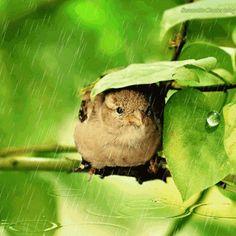 Chuva é sempre bom!