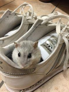 Nella scarpa