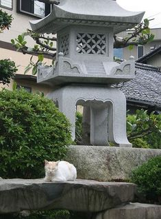 Japanese #garden cat