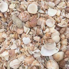 """1,453 mentions J'aime, 20 commentaires - Estelle Lefebure (@estellelefebure66) sur Instagram: """"#islandspirit #shells #sea #sun #beach"""""""