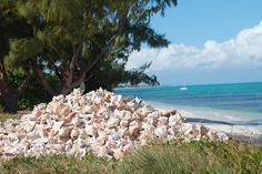 Conch Pile at Da Conch Shack in the Turks & Caicos.