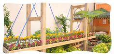 emilia anaokulu bahçeleri - Google'da Ara