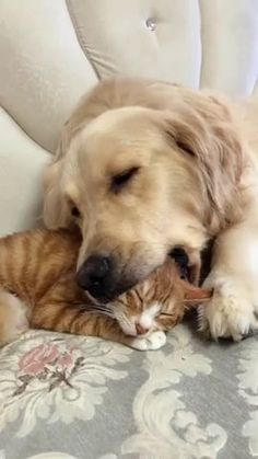 Animals And Pets, Baby Animals, Funny Animals, Cute Animals, Funny Cats And Dogs, Cute Dogs, Cute Couple Sleeping, Cute Animal Pictures, Funny Animal Videos