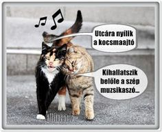 Animals And Pets, Funny Animals, Funny Memes, Jokes, Love Pet, Funny Photos, Haha, Have Fun, Kittens