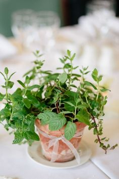 potted basil as a centerpiece
