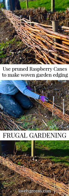 Potager Garden This easy and frugal project shows you how to weave pruned raspberry canes into attractive garden edging. - This easy and frugal project shows you how to weave pruned raspberry canes into attractive garden edging. Diy Garden Fence, Potager Garden, Garden Edging, Garden Beds, Easy Garden, Border Garden, Organic Gardening, Gardening Tips, Gardening Vegetables