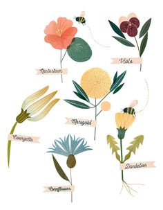Clare Owen, wild flowers, nature, plants, poster, drawing, illustration