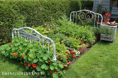 This Bed Frame Garden is a great upcycle. You'll  also love to learn about Companion Planting and how to root Tomatoes!