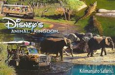 Kilimanjaro Safaris Climb aboard your open-sided safari vehicle for an exciting expedition through an African savannah. Animals like g. Disney World Rides, Disney World Resorts, Disney Vacation Club, Disney Vacations, Vacation Checklist, Bay Lake, Disney Posters, Kilimanjaro, Safari Animals