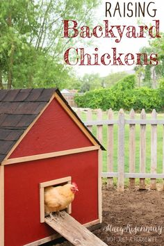 DIY chicken coop: Raising Backyard Chickens