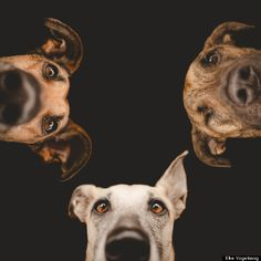 German Photographer, Elke Vogelsang, Gets Up Close And Personal To Capture Dogs' Expressions #photography