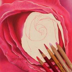 #fleur #rose #couleurs #colors #pastelsec #softpastel #softpastelart #pastelmat #dessinrealiste #realismart #realisticart #artwork #pastelart #pastelartist #pasteldrawing #pastelpainting #pastelpencils #carbothello #carandache #pittpastel #botanicalartist #botanicaldrawing #suisse #switzerland Soft Pastel Art, Pastel Drawing, Caran D'ache, Pastel Pencils, Botanical Drawings, Realism Art, Rose, Switzerland, Colors