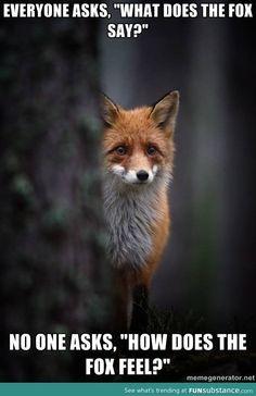 how does the fox feel?