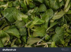 Lamb'S Lettuce Salad. Background Zdjęcie stockowe 277125359 : Shutterstock