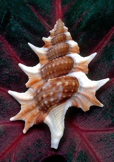 ❥ Shells are Swell – Beautiful Examples of Seashell Photography