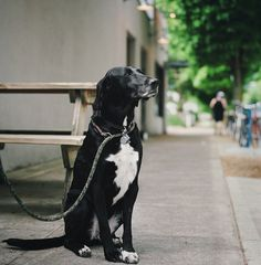 3.) Killan: This distinguished dog's owners noticed it acting strangely aggressive to the babysitter of their 7-month old son. Based on the odd behavior, they left a camera to record the sitter the next time she came to watch the infant and discovered she had been physically and verbally abusing the small child.