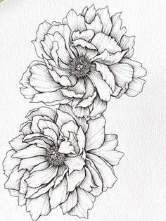 Flower Drawing Images, Flower Sketches, Floral Drawing, Art Drawings Sketches, Tattoo Sketches, Black And White Flower Tattoo, Black And White Drawing, Botanical Art, Botanical Illustration