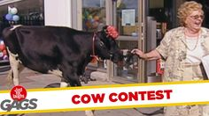 Win A Cow Prank - Throwback Thursday