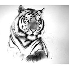 Tiger                                                       …