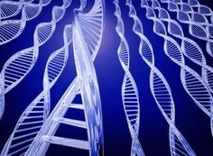 Our genes influence how we look, but do they affect our behavior? What is epigenetics and its influence on our sense of consciousness and self-awareness. Dna And Genes, Genome Project, Massachusetts General Hospital, Cell Line, How To Influence People, New Inventions, Cancer Treatment, Science And Technology, Science News