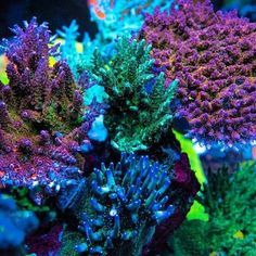 SPS boyeeee check out Sps Coral, Underwater Life, Saltwater Aquarium, Corals, Jar, Awesome, Nature, Plants, Check