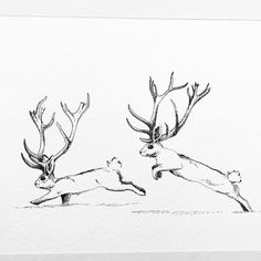 Card by Larissa Lycholaj https://www.facebook.com/laravidaart?ref=aymt_homepage_panel #art #jackalope #rabbit #bunny #cute #drawing #card #whimsical