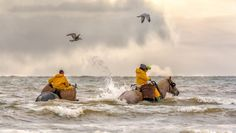 The Fishing Horses of Belgium Will Take Your Breath Away