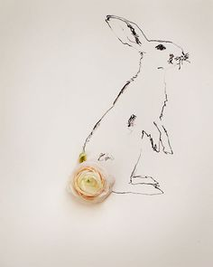 Kari Herer - rabbit