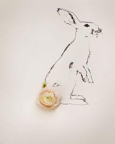 /bunny