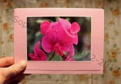 This week's Item of the Week is the Sweet Pea Flower Photo Greetings Card with 20% off! Was £2.00, Now £1.60! This card is perfect for Mother's Day (Sun 10th March), and is blank inside for your own special message to your Mum :) (This offer will run from Sun 17th Feb until Sun 24th Feb 2013.)  THIS OFFER HAS NOW EXPIRED.