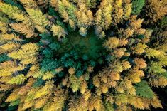 Spectacular Aerial Photos of the Colorful Polish Landscape in Autumn