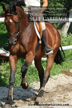 Does your horse carry himself? Audio horse riding lessons to help you develop more self carriage while riding   Daily Strides Podcast   Audio horse riding lessons