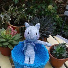 colette.poupoune:: Mon doudou chat dans sa corbeille avec les succulents du jardin à palais belle ile