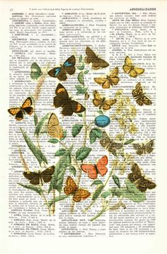 Wild Flowers and butterflies-Art print Dictionary art by PRRINT