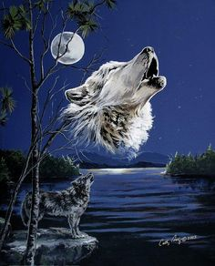 Wolf howling full moon blue night sky gray wolf water front by Cathy Cooksey kK Wolf Images, Wolf Photos, Wolf Pictures, Beautiful Wolves, Animals Beautiful, Der Steppenwolf, Wolf Howling At Moon, Moon On The Water, Indian Wolf